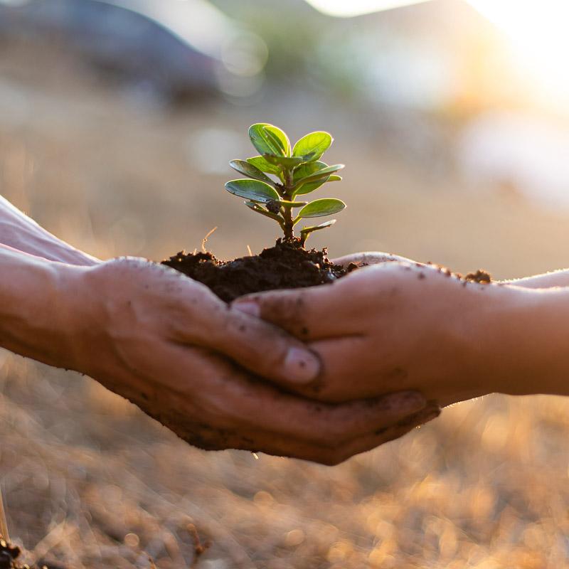 Zwei Paar Hände halten Erde mit einem zarten Pflänzchen.